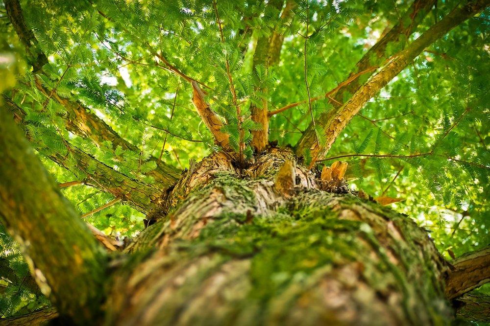 S'oxygéner en forêt Valérie Garab
