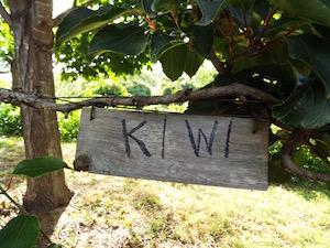 kiwigwc.jpg