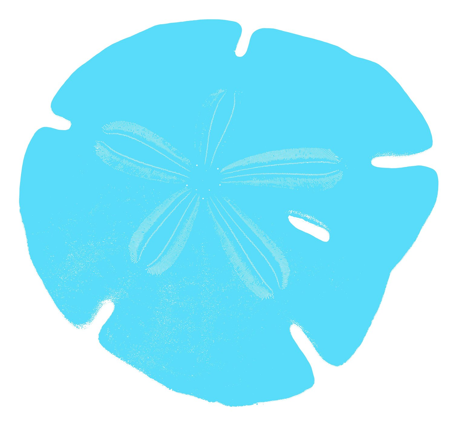Sand Dollar Bookkeeping