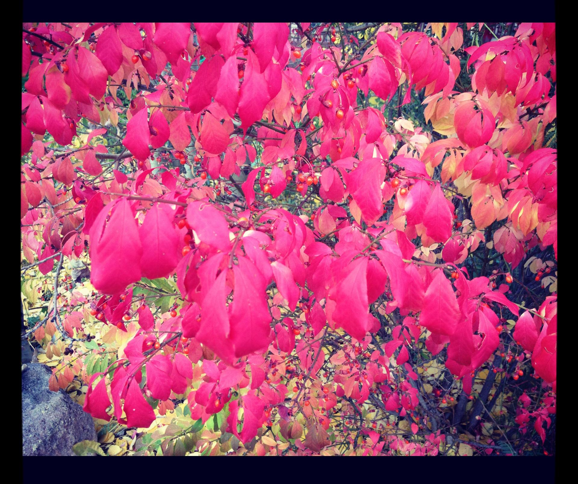 Colorado Fall Color
