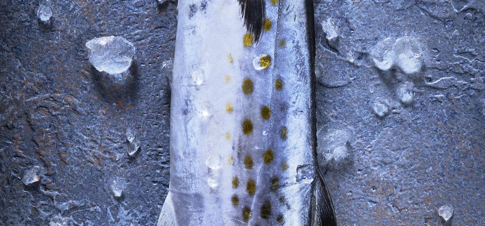 Mackerel_2.jpg