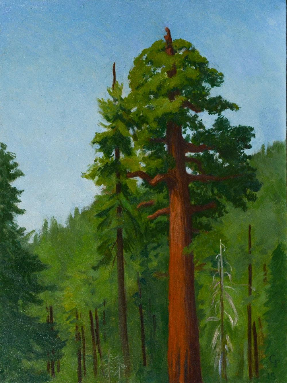 "Sequoia, oil on panel, 12"" x 9"""