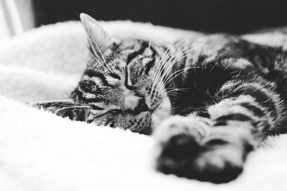 FAQS - The doctors and staff of Jasper Animal Hospital want to make you and your pets' experience at our clinic to be as calm and comfortable as possible. Please do not hesitate to contact us at any time with questions about your pet's health or surgery.