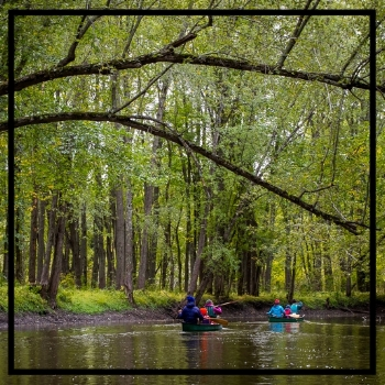 friends canoeing through dense forest