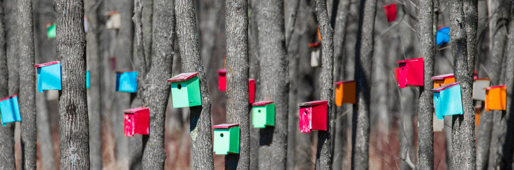 multicolored bright bird house panorama