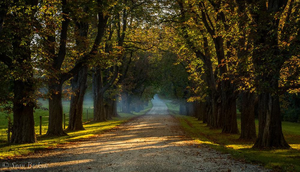 AutumnVT-6.jpg