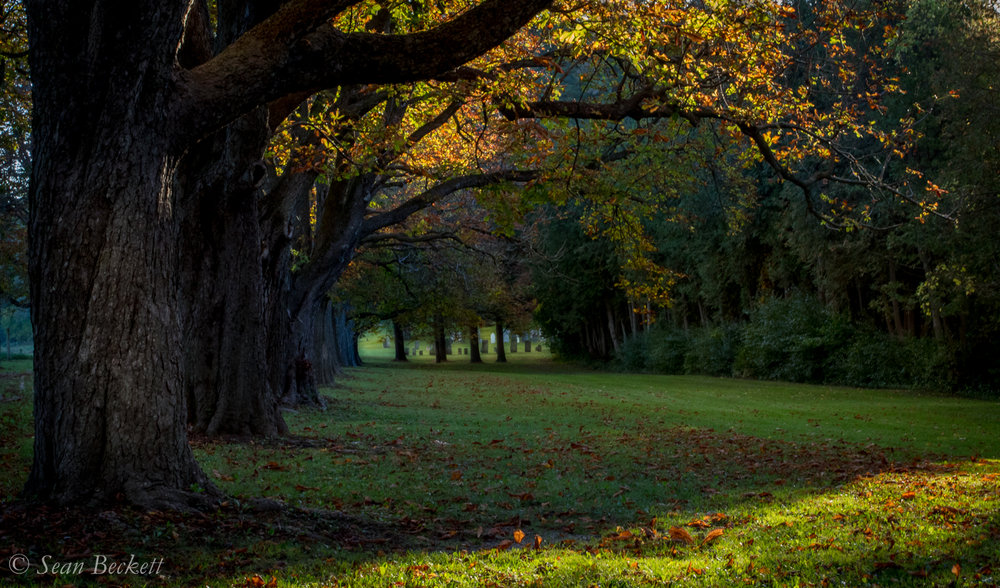 AutumnVT-7.jpg