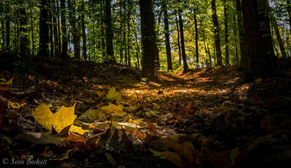 AutumnVT-8.jpg