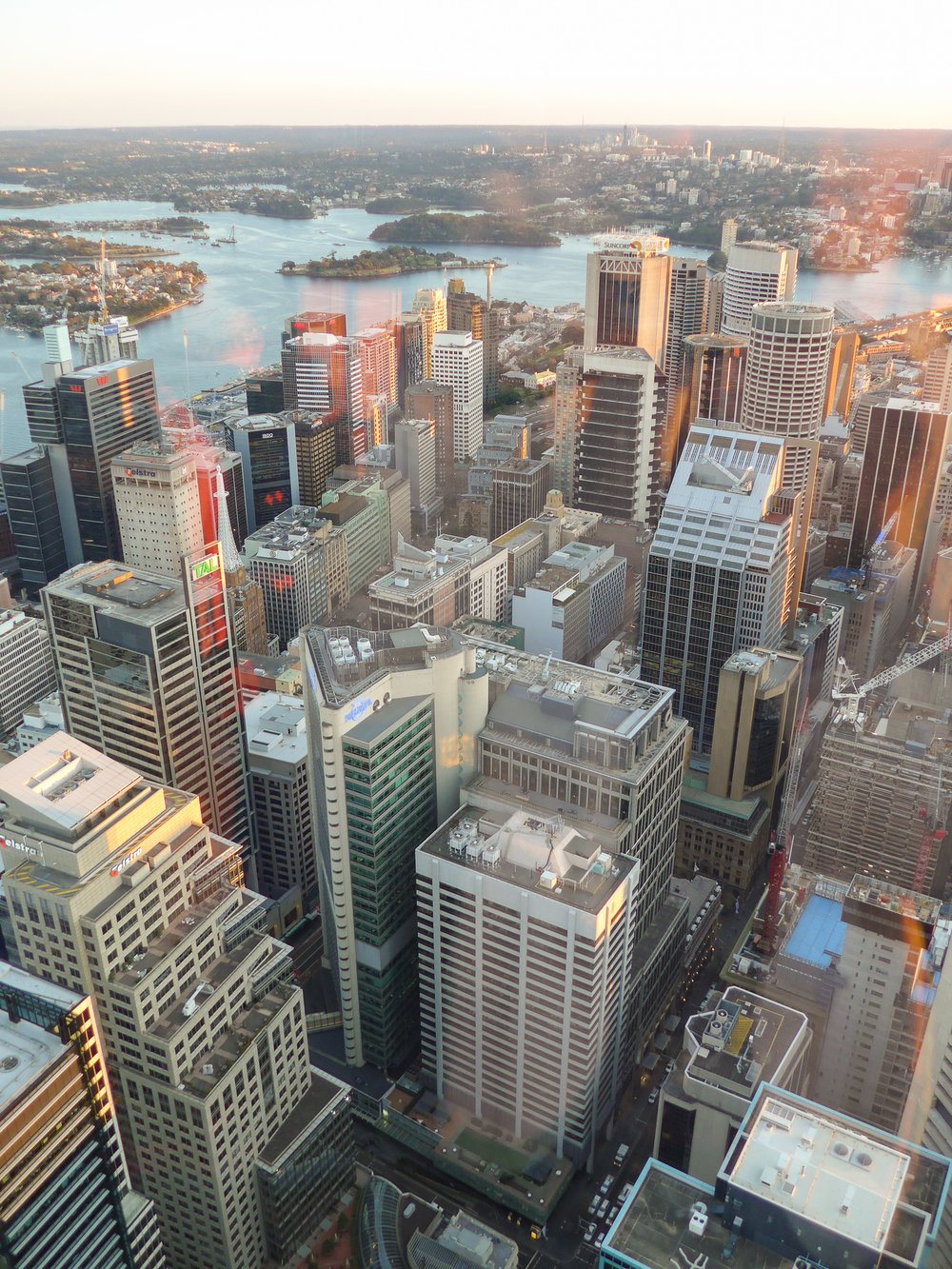 city view from the sydney tower