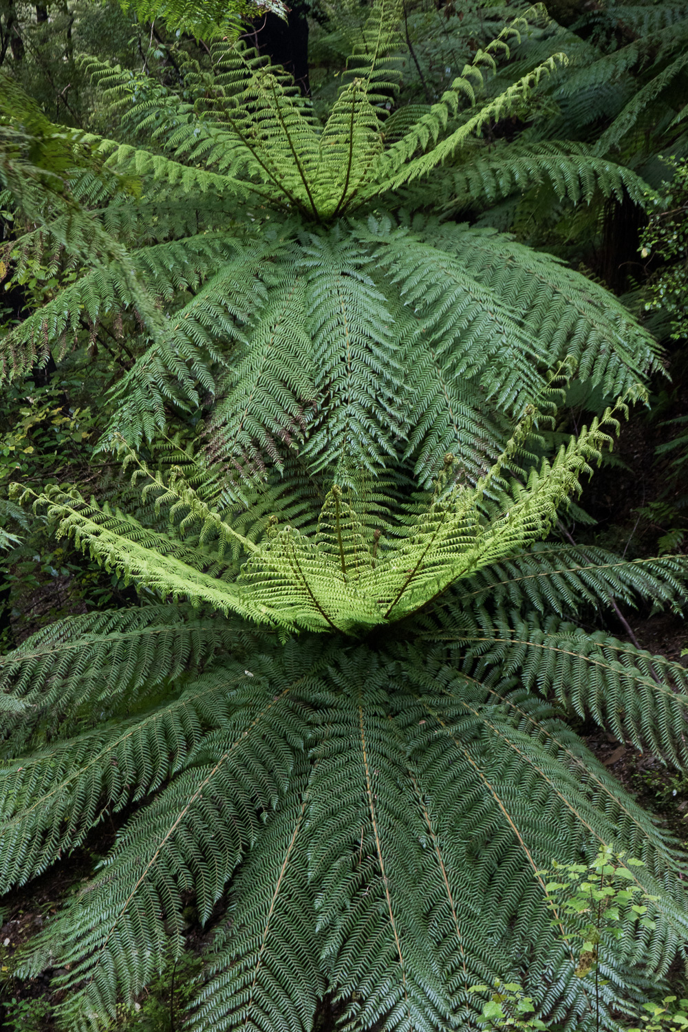 New Zealand Fern Floura
