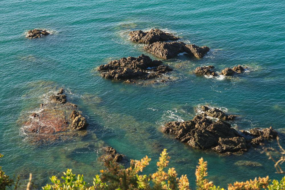 rocky seashore in auckland