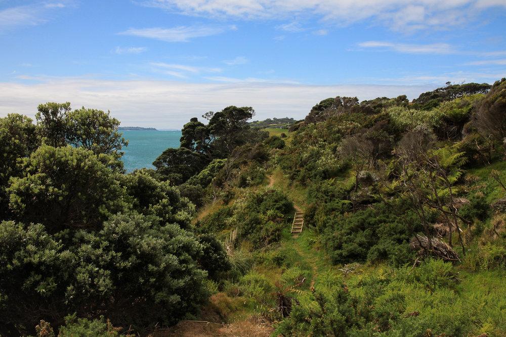 coastal hiking track on waiheke island
