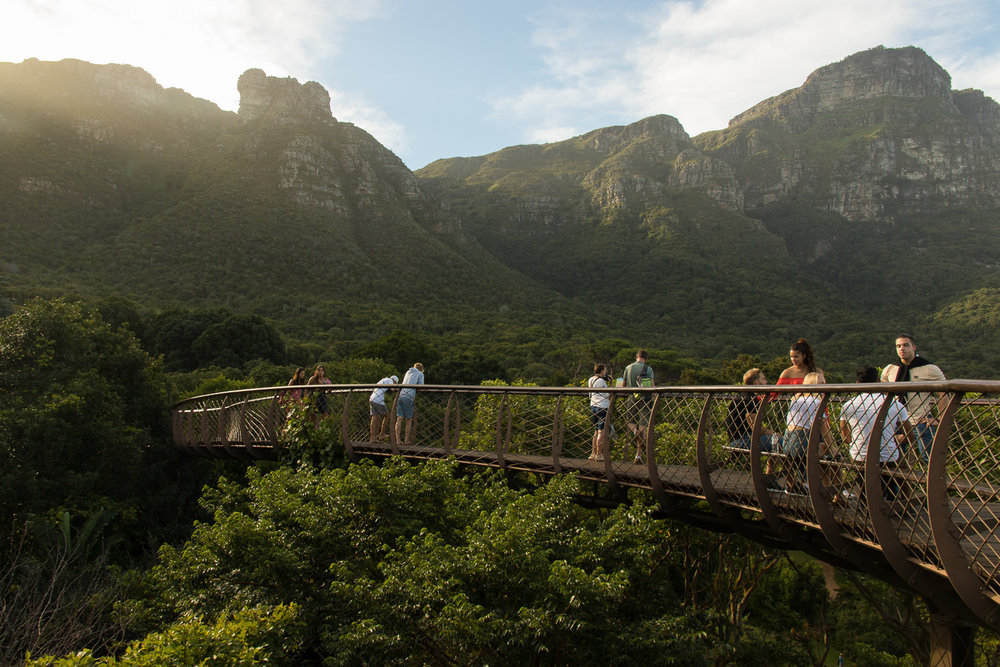 tourists in botanical gardens in cape town