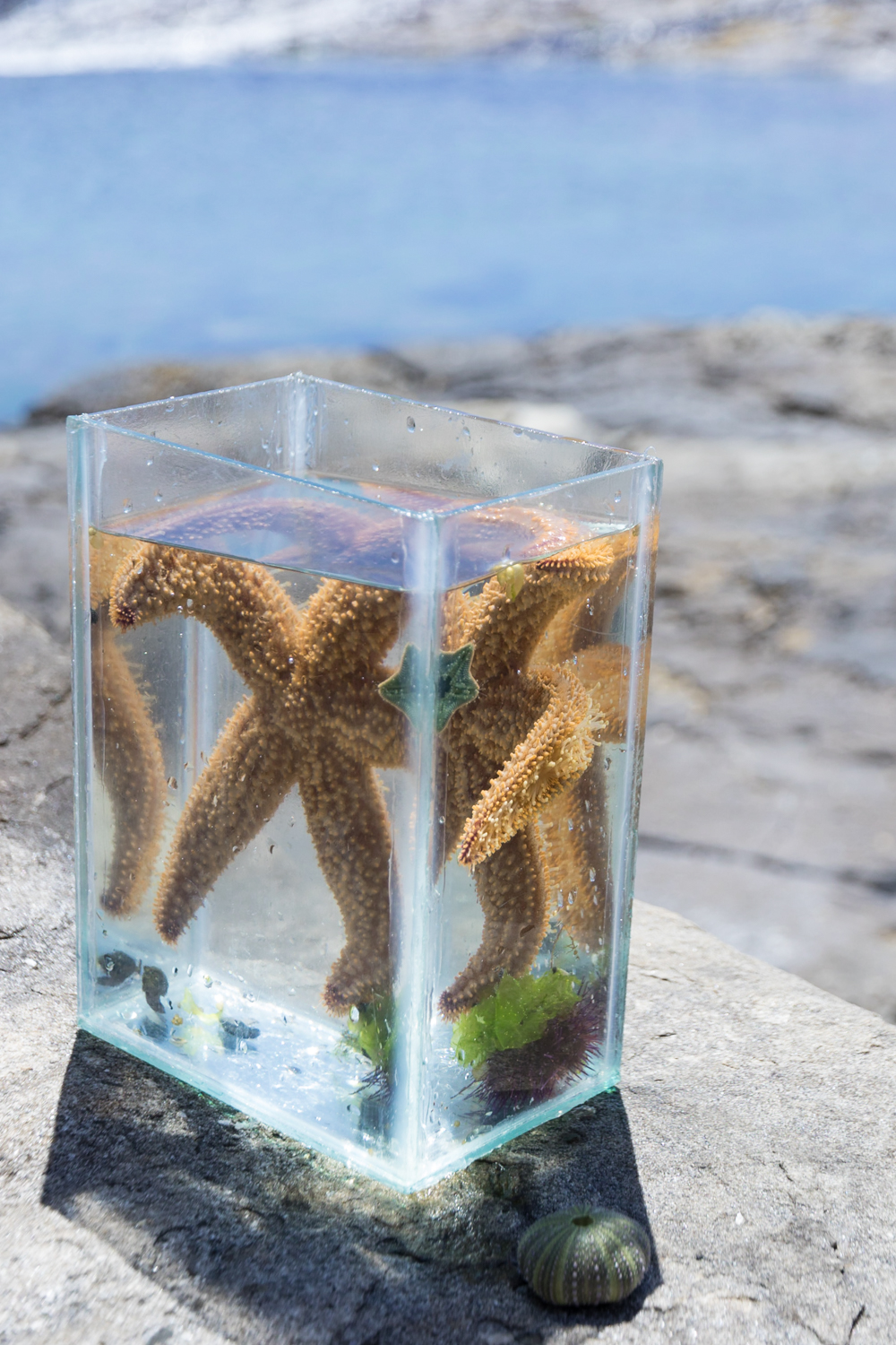 star fish in glass box