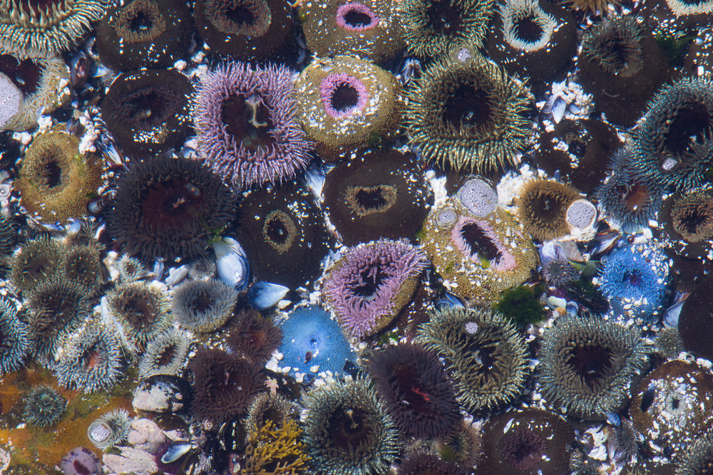 colorful marine life in water