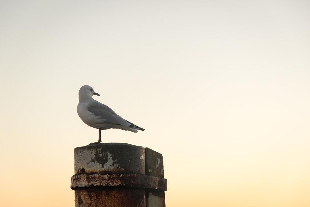 seagull_sunrise