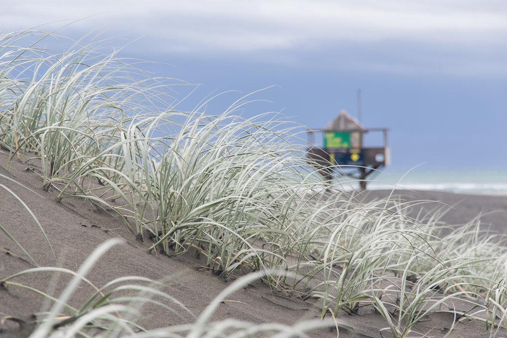 auckland_beach