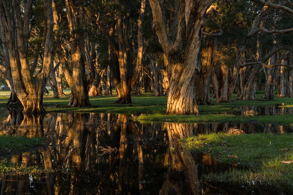 park_trees_reflection