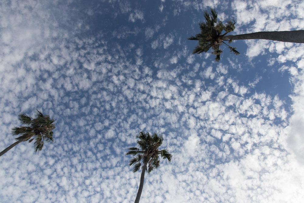 palms_sky