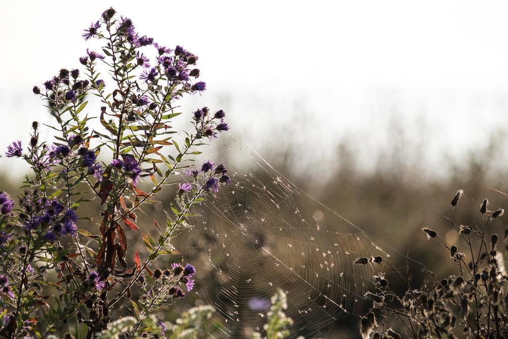 spiderweb in flowers