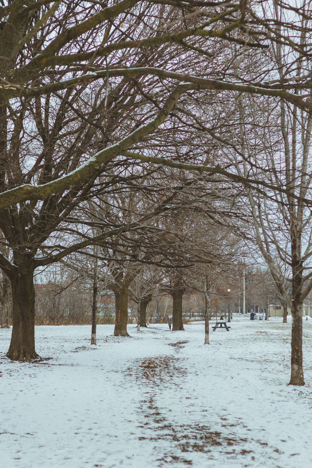 winter park scene in Toronto