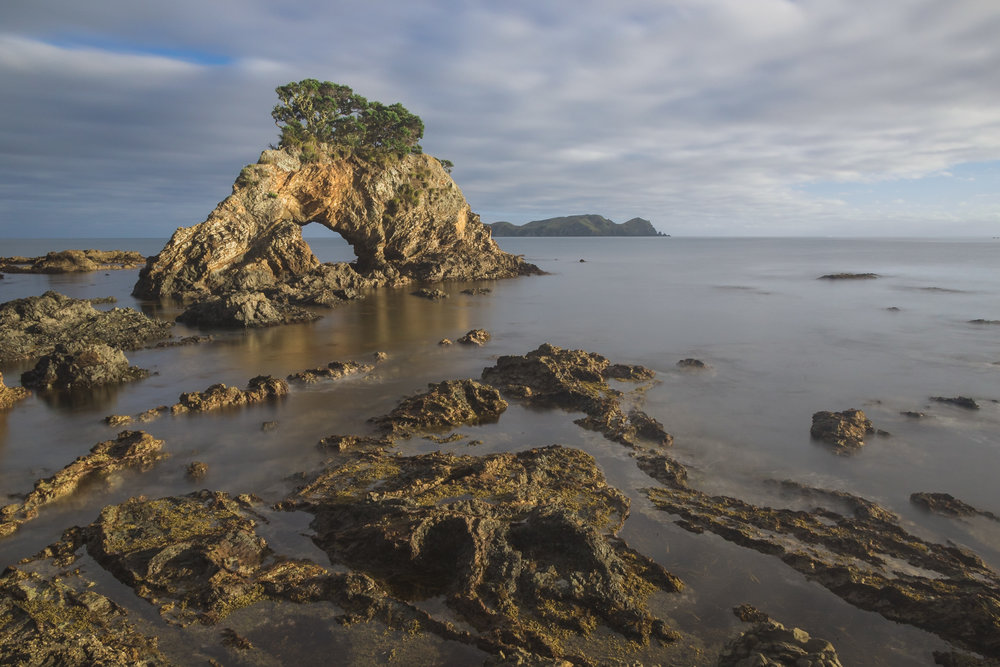 rock formations along the northland coast of New Zealand at sunrise