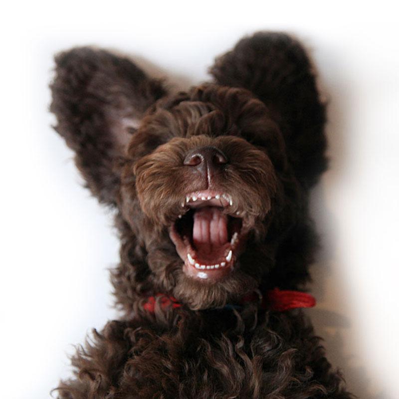 My crazy dog Diesel !