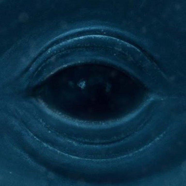 Frank Ocean - Memrise - Artwork