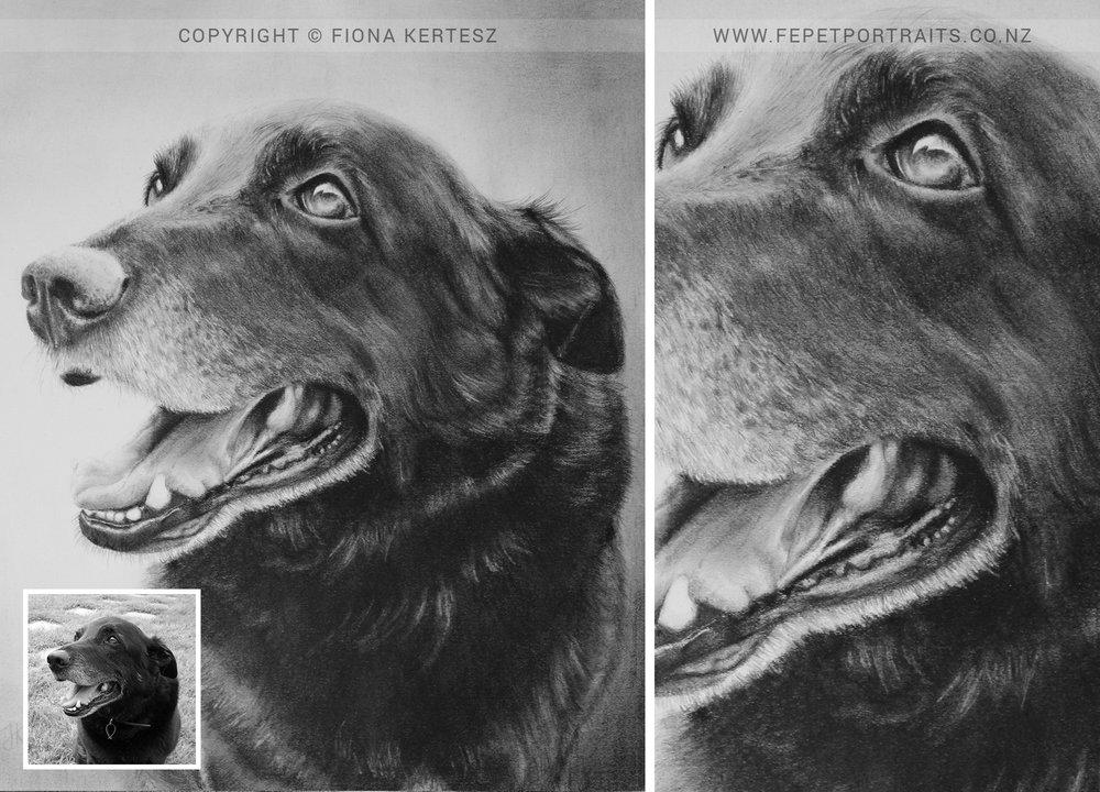 Polo, Pencil Portrait, 9 x 9.5 inch