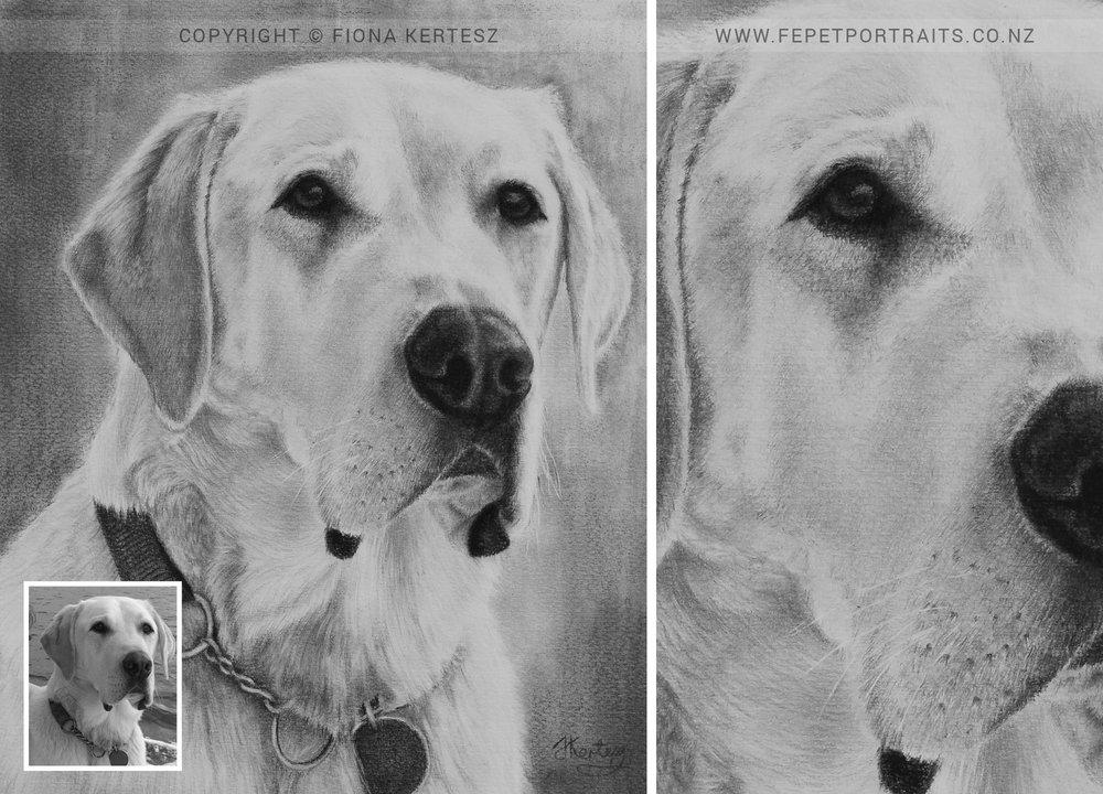 Upton, Pencil Portrait, 10 x 12 inch