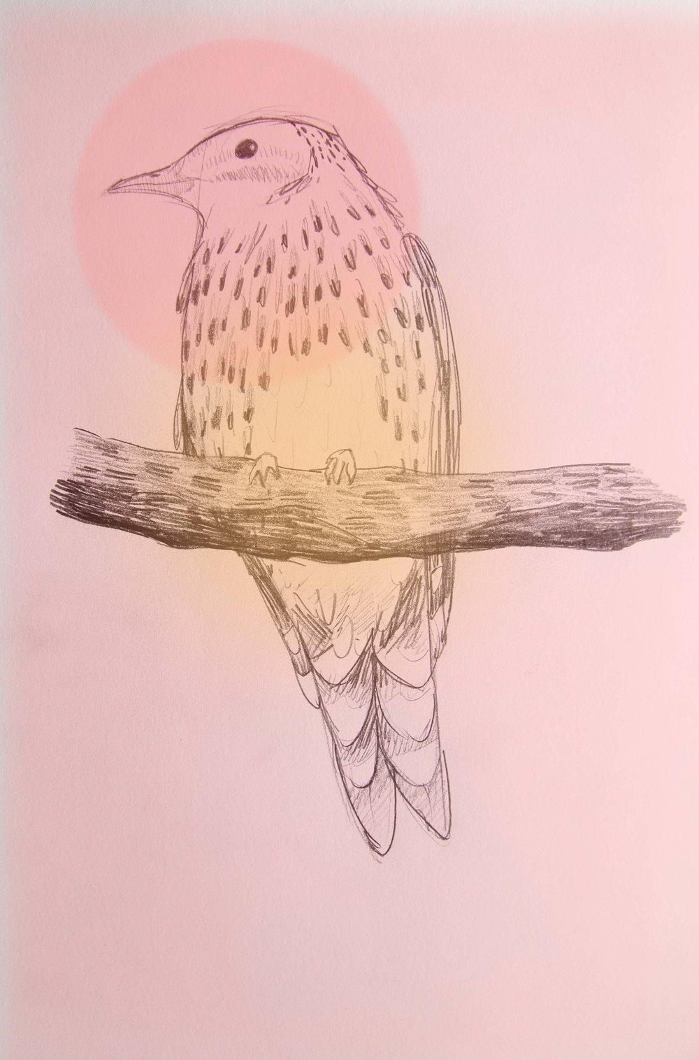 tassie bird 1.jpg