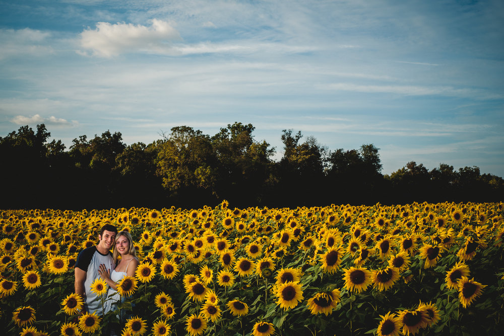 Sunflower Wheres Morgan-8.jpg