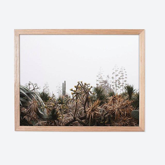 An idea of what your favourite image can look like, framed in beautiful Tasmanian Oak with no mount - something I am becoming quite partial to 😊 #nomountforthewin #sotrendy  #cactus #cactusseries #colourlife