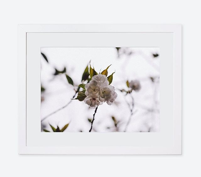 Loving this white on white look. All images can be ordered with a white or a natural (Tasmanian Oak) timber frame. And with or without a mount. Click the link in my bio to have a look through my shop.  #floral #floralseries #colourlife