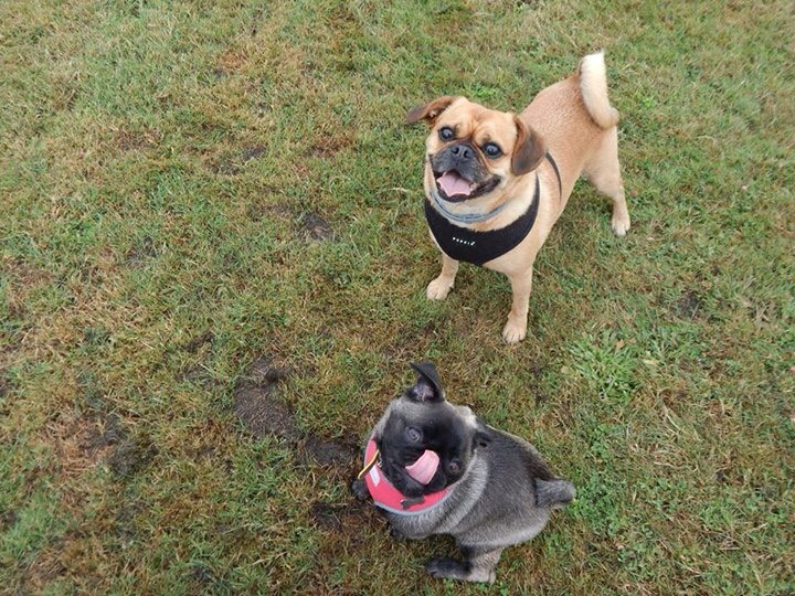 Dog walking services in Portsmouth UK