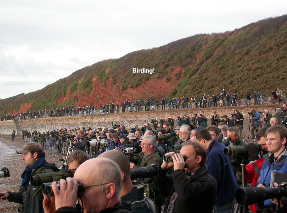 Photo from the report showing birders in action.