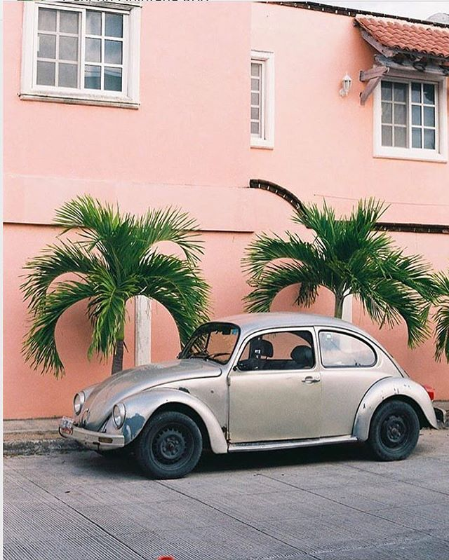 Punch buggy (tag your bae's to play the game) 🥊 via @plantsonpink