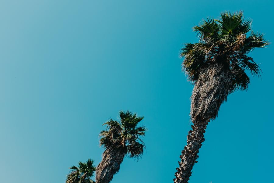 016-nice-france-palm-tree-house-travel-photography.jpg