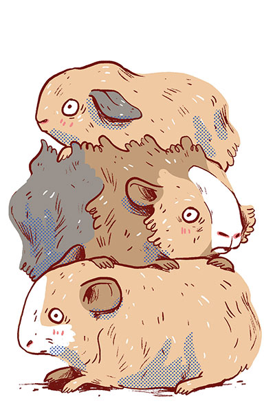 Ein Meerschweinchen, zwei Meerschweinchen...