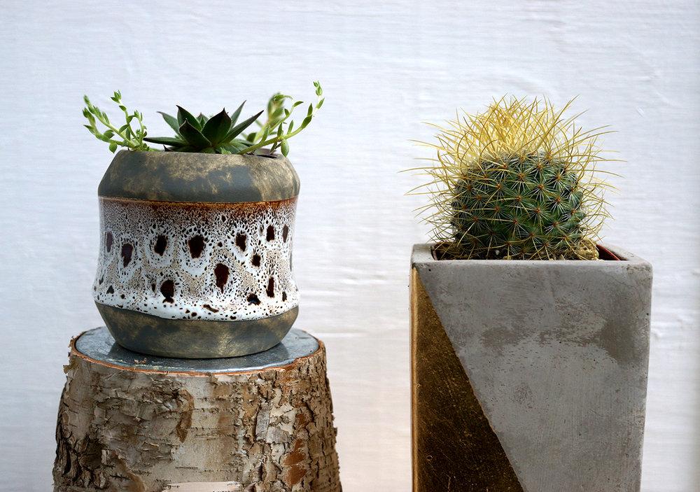 succulent group 3.jpg