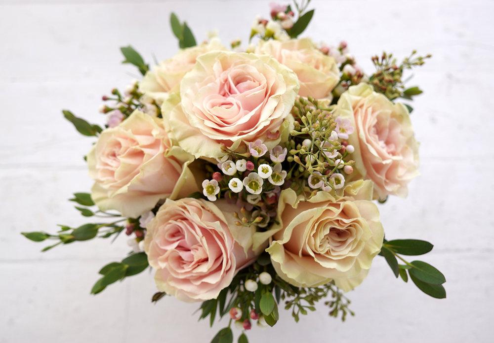 vd pink rose promo 3.jpg