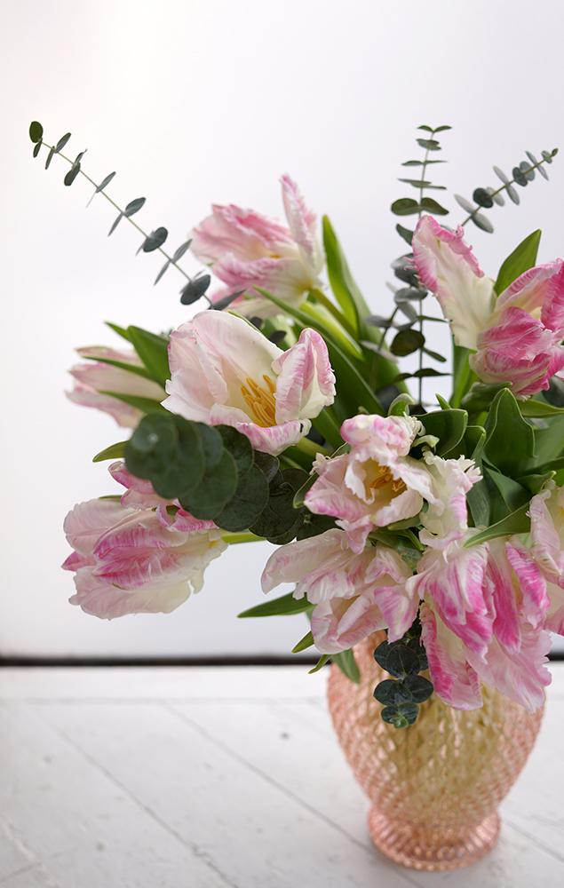vd tulip promo 3.jpg