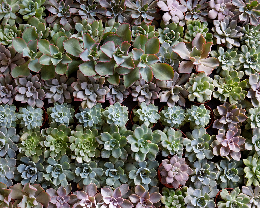 succulent tray.jpg