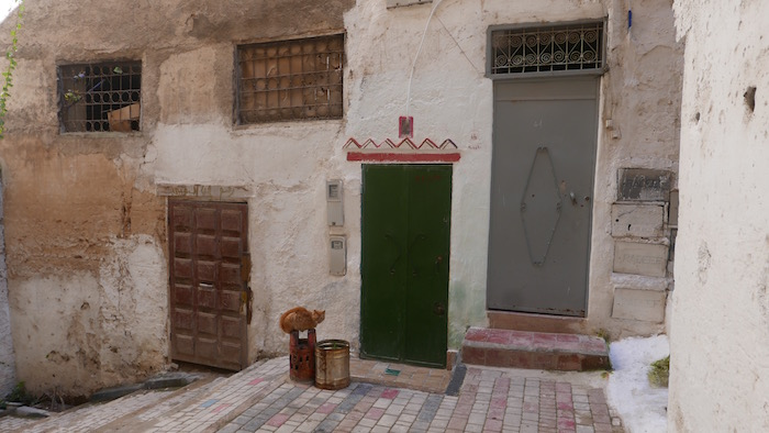 Stray cats are everywhere in Morocco.