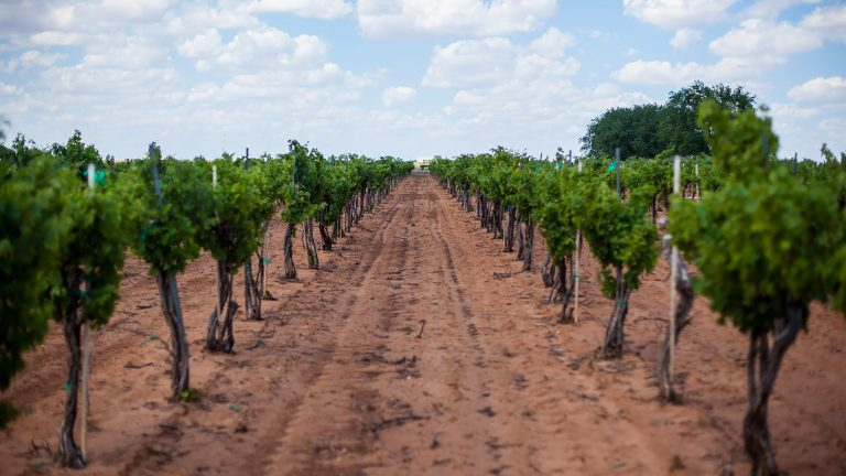 Why Cotton Farms in West Texas Are Becoming Vineyards - Seven Fifty Daily, July 2018 Out on the high plains of West Texas, cotton is king. Five million acres of cotton fields sit.... Read More