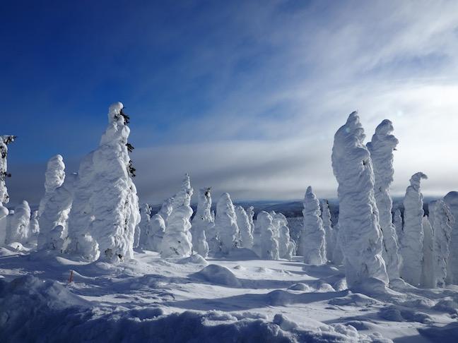 borealus forest in winter .jpg