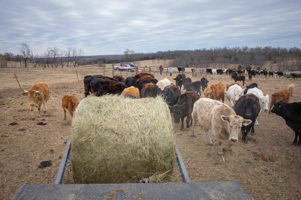 Buckner-Dairy--0058.jpg