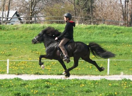 - Rider: Gudmar Petursson