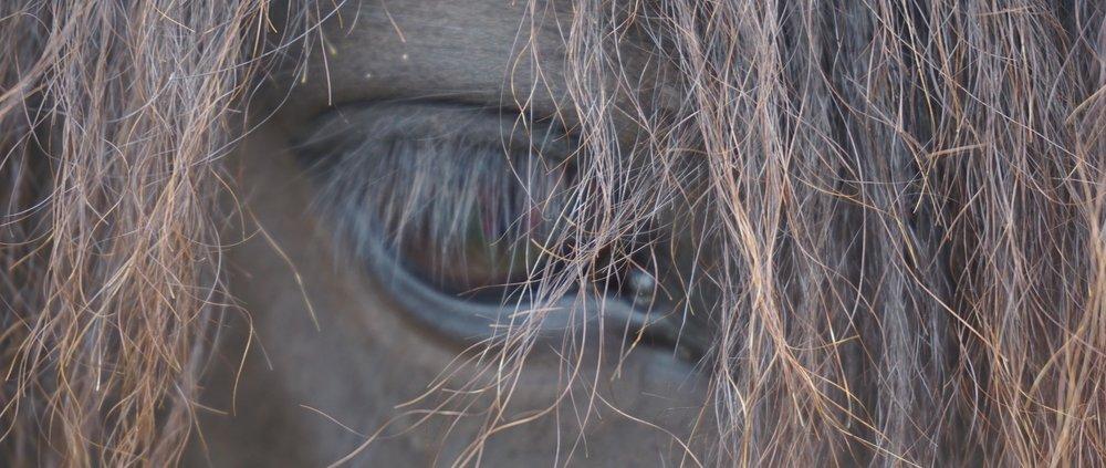 horses-2394125_1920.jpg