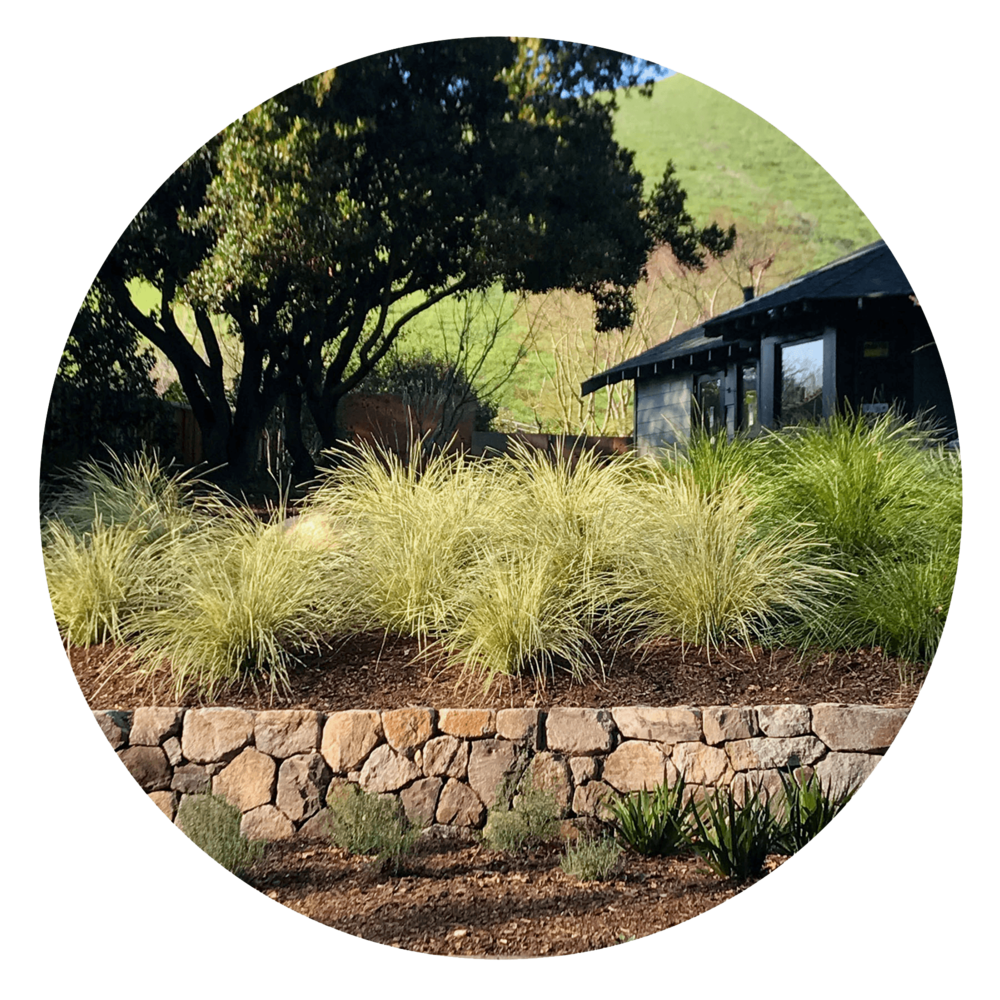 Stabilize Hillsides - Safeguard hillsides from erosion by wind and water with plants — they prevent open areas from wearing away and keep topsoils in place.
